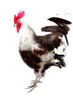 Little Red Rooster 4 #109098
