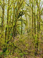 Trees 5 #109383