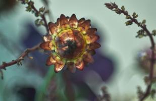 Botanical Arrangement 4 #109819