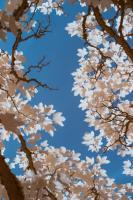 spring #110425