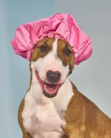 Spa Dog Hat #110515