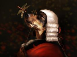 Sir Dashound #11788