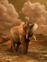 The Elephant Ricardo 3 #11791