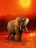 The Elephant Ricardo 6 #11792