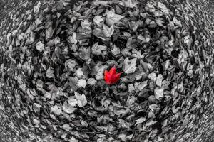 Red Leaf #11798