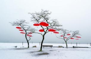Red Umbrellas #11801