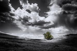 The Green Tree #11802