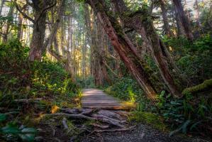 Woods I #11803