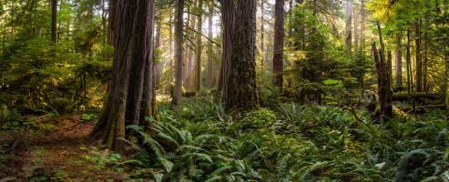 Woods II #11805