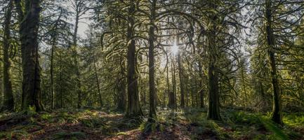 Woods IV #11809