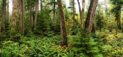 Woods V #11811