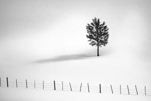 Tree And Fence Bw #11818