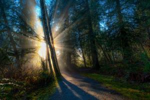 Sunlight Throught Trees #11822