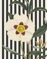 Herbal Botanical XXVII Bold Crop #41693