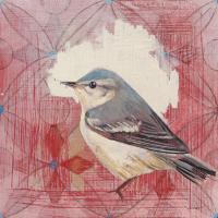Cerulean Warbler #43542