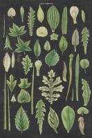 Assortment of Leaves II Charcoal Crop #50542