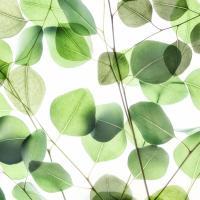 Verdant Leaves 1 #51875