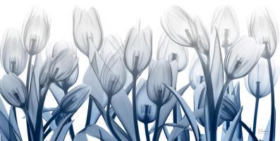 Midnight Blooms1 #52896