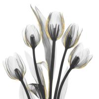 Gold Embellished Tulips 1 #52926