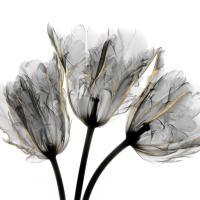 Gold Embellished Tulips 3 #52928