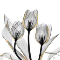 Gold Embellished Tulips 5 #52930