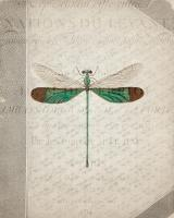Dragonfly Book 2 #53053