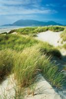 Oregon Dunes Grass #53745