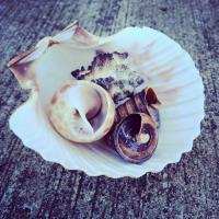 Shell Studies D #90128