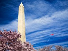 Washington Monument with Kite and Cherry Blossoms #82493