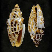 Golden Ocean Gems I #CKL112236