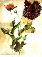 Poet Floral and Botanical #86311