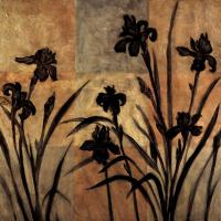 Iris Silhouette II #ERL4340