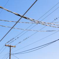 Birds on Wire #88383