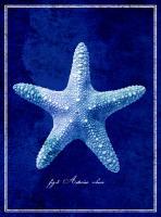 Starfish #87136