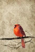 Cardinal #87149