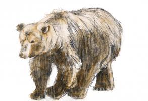Yarn Bear #98508
