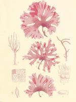 British Seaweed Plate IX #86852