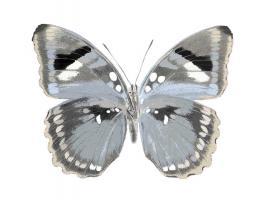 Butterfly in Grey I #JBC113335