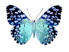 Butterfly in Metallic II #JBC113364