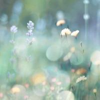 Morning Meadow I #KC111612