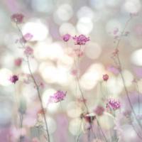 Floral Meadow II #KC111615