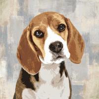 Beagle #KG114630
