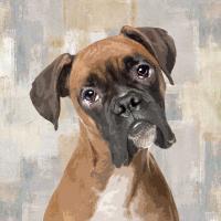 Boxer #KG114631