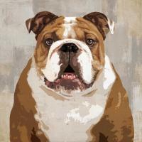 Bulldog #KG114632