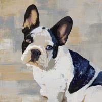 French Bulldog #KG114634