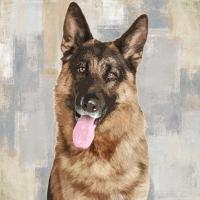 German Shepherd #KG114635