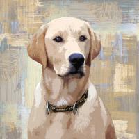 Labrador Retriever #KG114637