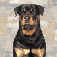 Rottweiler #KG114643