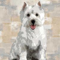 West Highland White Terrier #KG114645