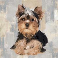 Yorkshire Terrier #KG114646